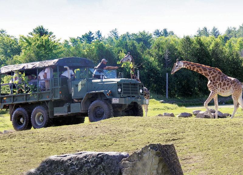 Parc Safari Hemmingford