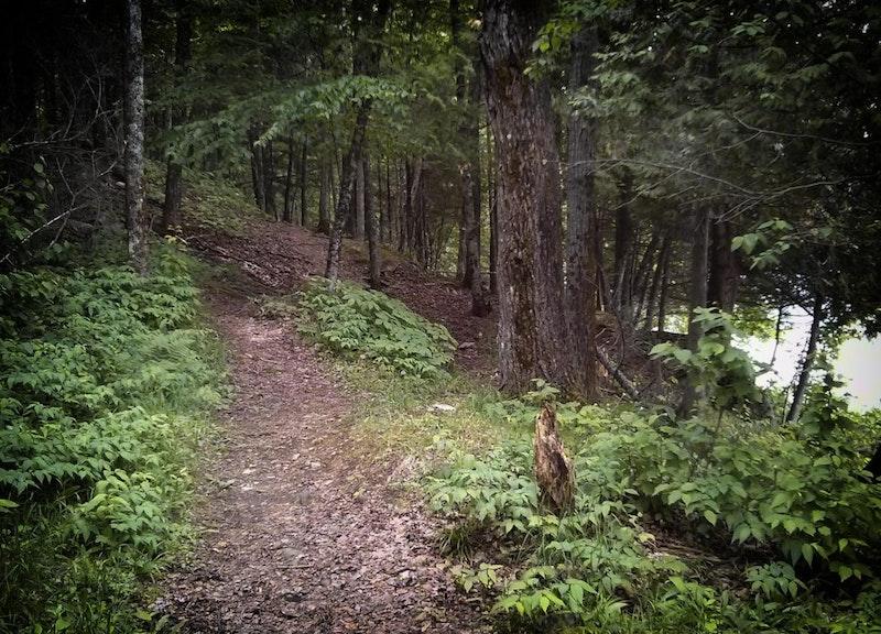 Les sentiers de la forêt habités Dudswell